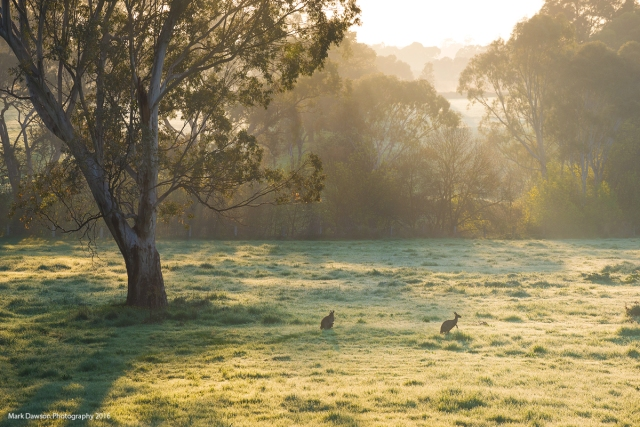 Kangaroos enjoying a very dewy morning.