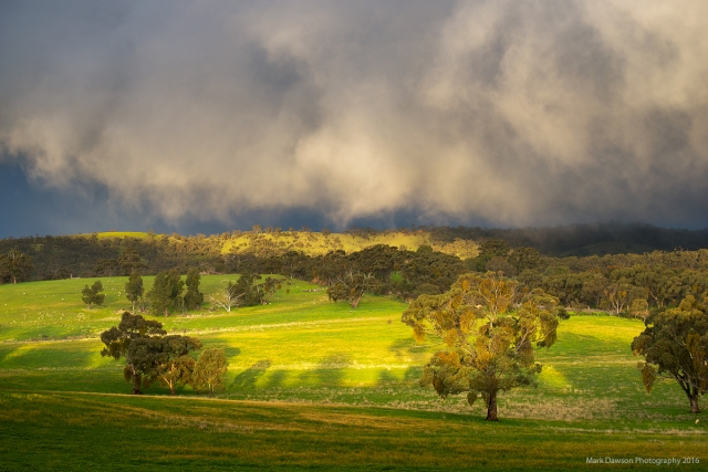 Vibrant greens as the late arvo sun lights up low cloud drifting through in association with a shower.