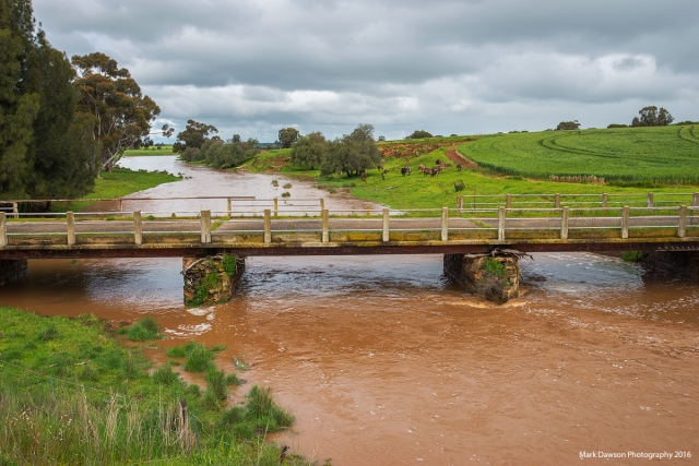 The Gilbert River at Tarlee, also flowing well.