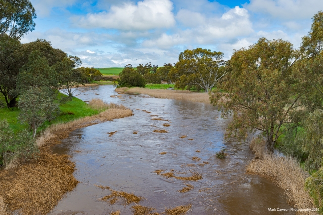 The Light River near Kapunda running wide, fast and turbulent.